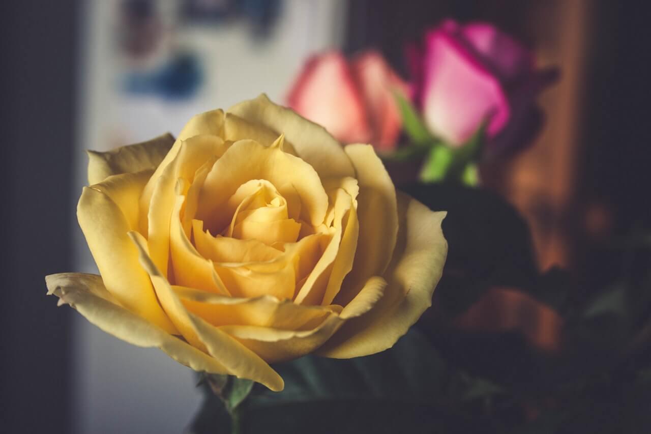バラの色の花言葉