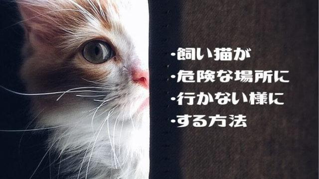飼い猫が 危険な場所に 行かない様にする方法