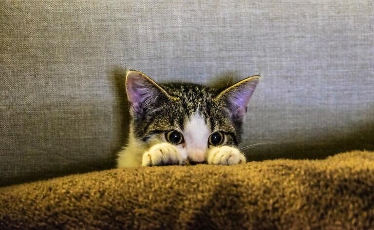 猫が嫌がることをする